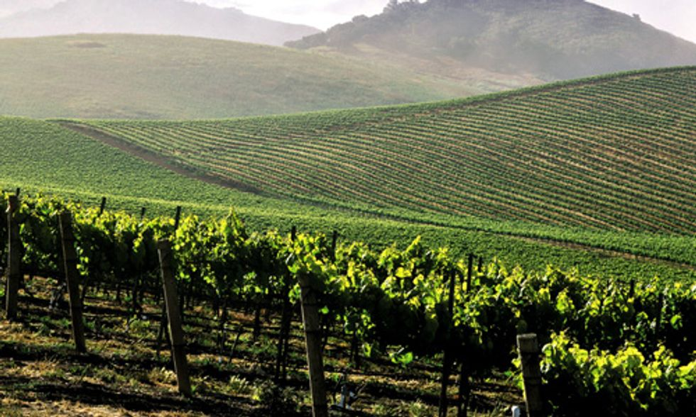 Monsanto's Glyphosate Found in California Wines, Even Wines Made With Organic Grapes