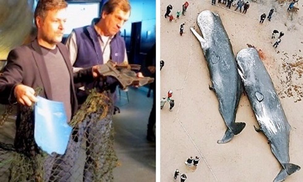 Car Engine Cover, Fishing Net and Plastic Bucket Found in Stomachs of Dead Sperm Whales