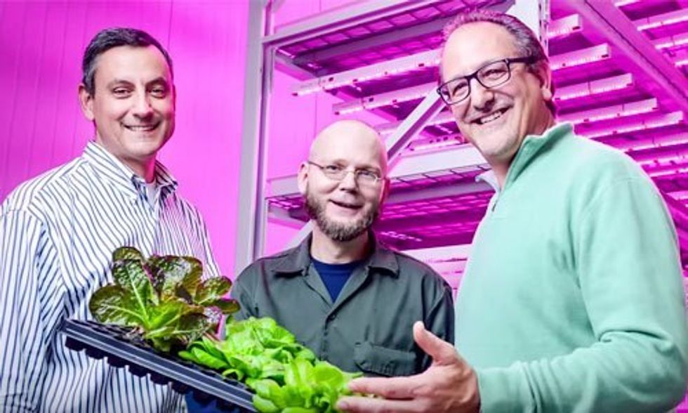 Vertical Farms: The Future of Agriculture?