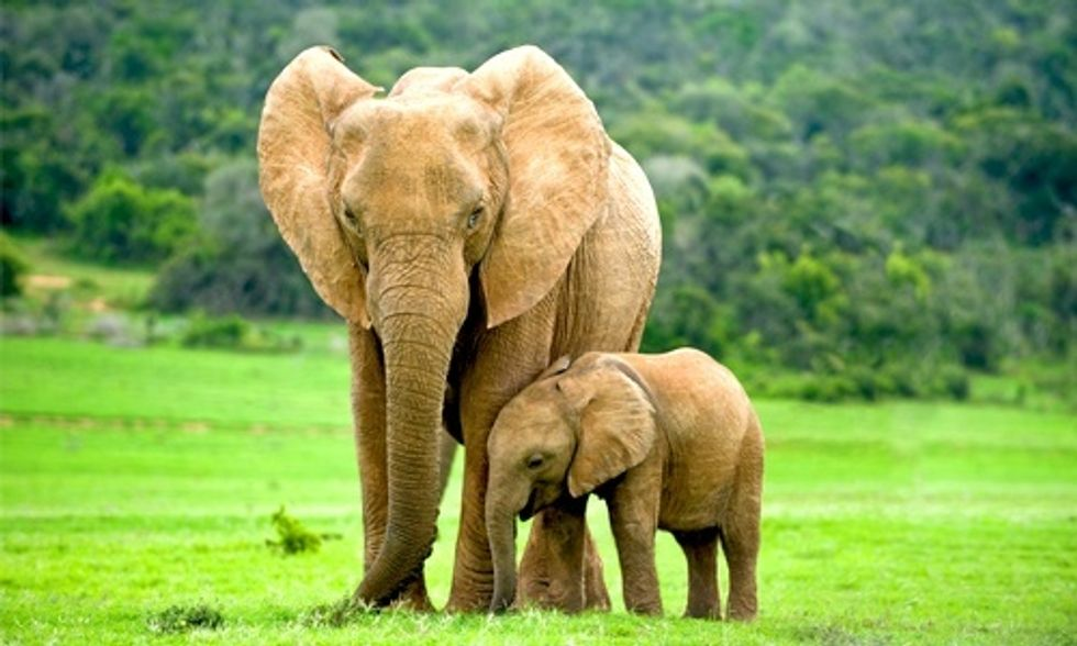 2 Elephants Killed in National Park Sparks Fear of More Poaching