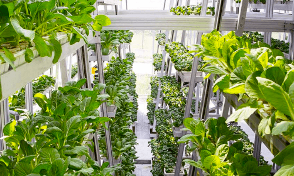 World's First Hydraulic-Driven Vertical Farm Produces 1 Ton of Vegetables Every Other Day