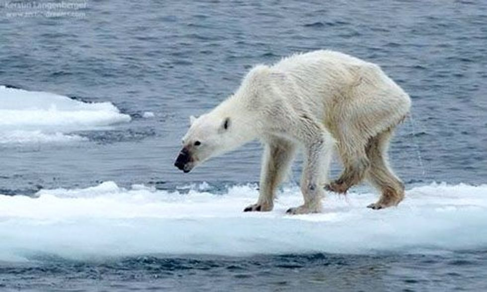 Shocking Polar Bear Photos Show Stark Reality of Climate Change