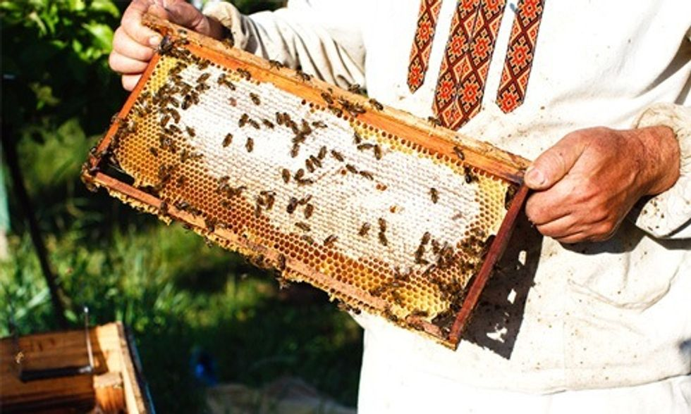 Bees Win Big in Court, EPA's Approval of Toxic Pesticide Overturned