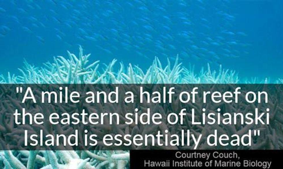 Hawaii on Verge of Worst Coral Bleaching in History as Water Temperatures Soar