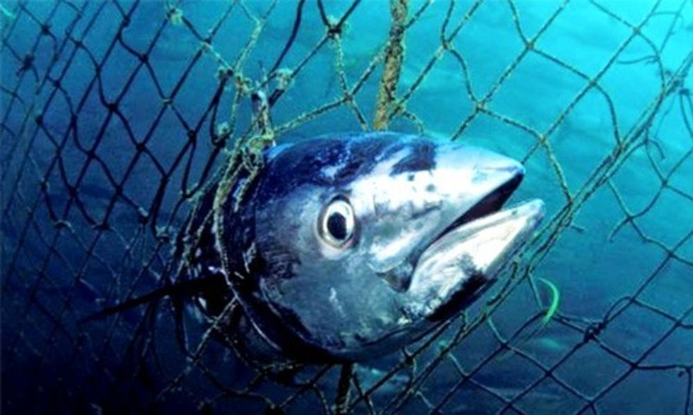 Marine Species on 'Brink of Collapse,' Says WWF Report