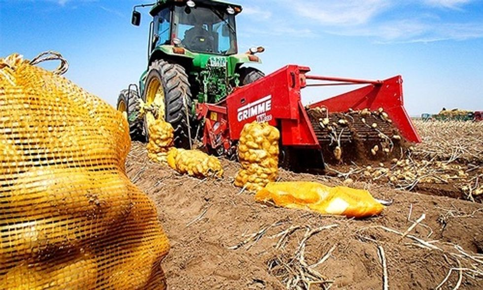 Northern Ireland Bans GMO Crops