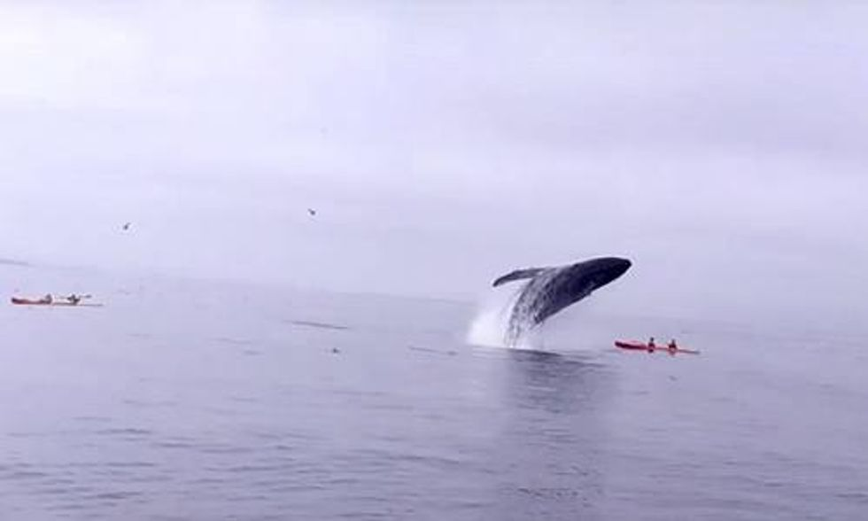 WATCH: Kayaking Duo Struck by Humpback Whale