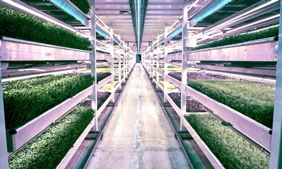 Former WWII Bomb Shelter Now World's First Underground Farm