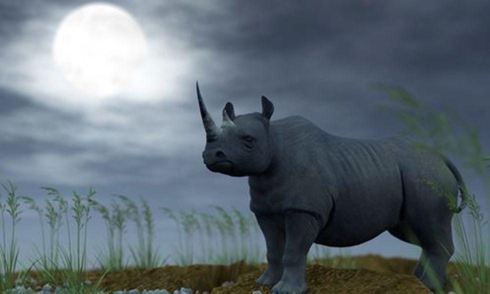 Supermoon Sparked Rhino Killing Spree as Poaching Numbers Skyrocket