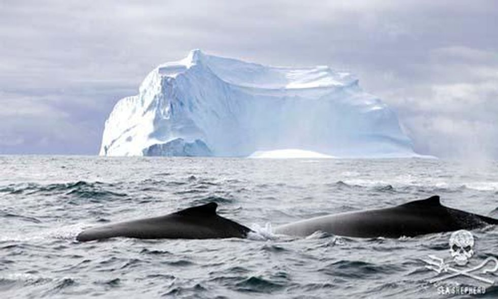 Paul Watson: If the Ocean Dies, We Die!