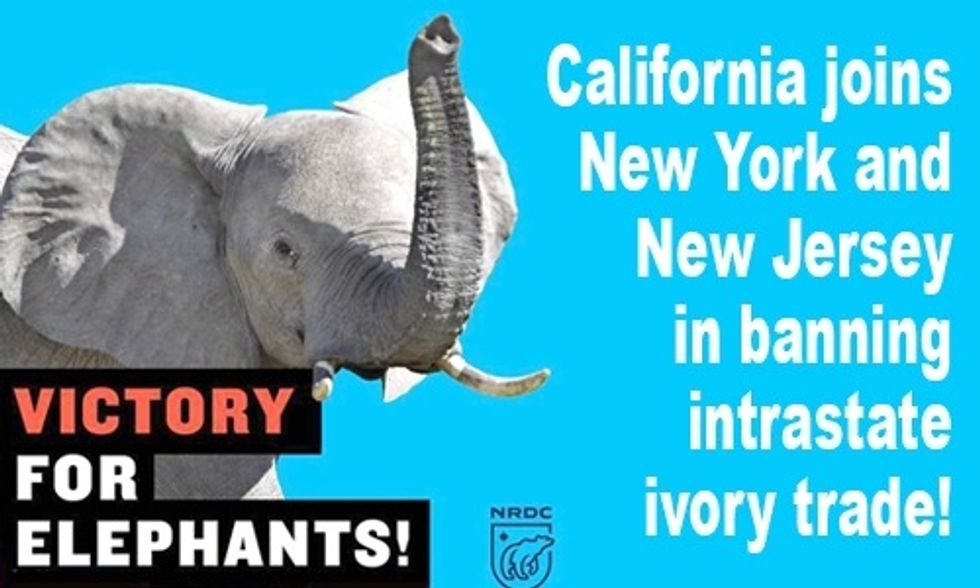 California Becomes Third U.S. State to Ban Ivory Trade