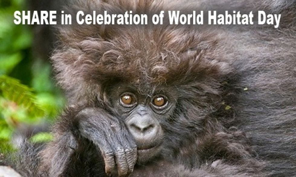 10 Cutest Wildlife Photos in Celebration of World Habitat Day