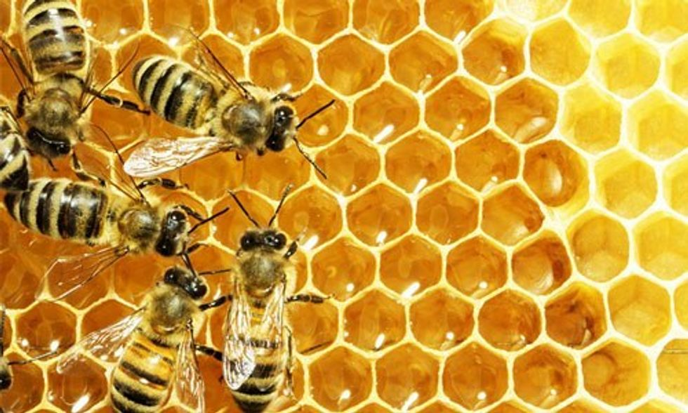 Honeybees Face Global Threat: If They Die, So Do We