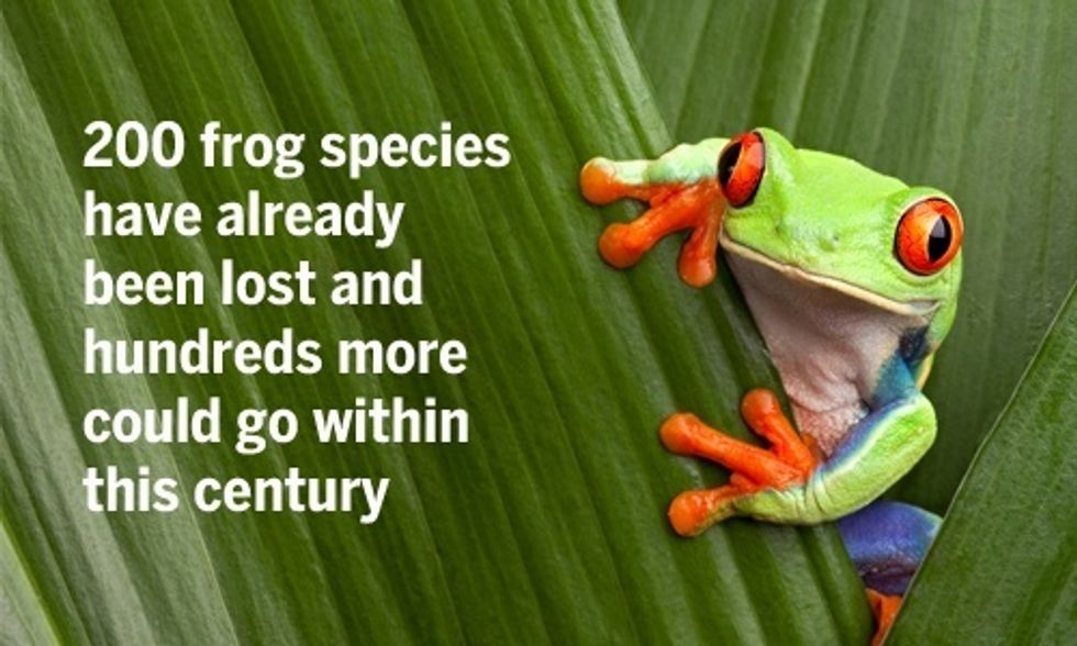 Frogs Are on the Verge of Mass Extinction, Scientists Say
