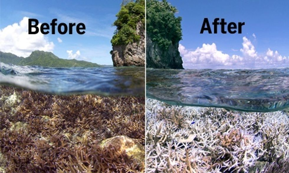 World's Oceans Face Worst Coral Die-Off in History, Scientists Warn