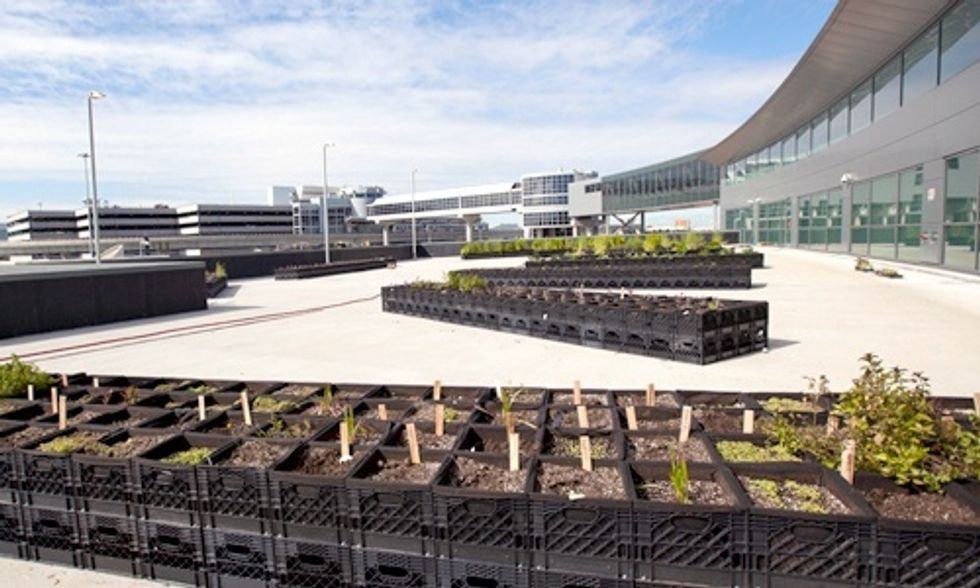 JetBlue Opens Urban Farm at JFK Airport to Feed Passengers and Local Food Banks