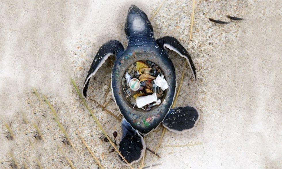 Disturbing Images Expose the Horrific Impact of Plastic Trash on Marine Animals