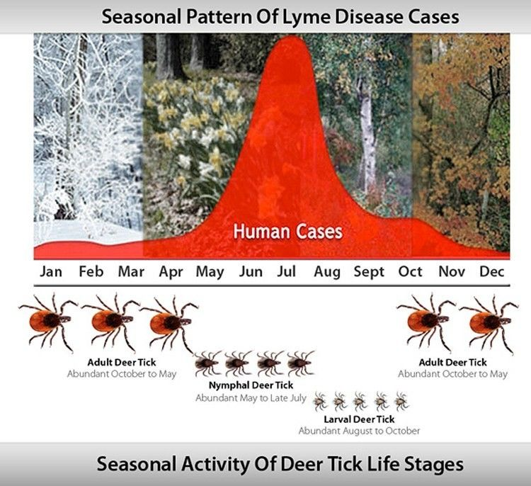 Dr  Mark Hyman: 7 Ways to Tackle Lyme Disease - EcoWatch