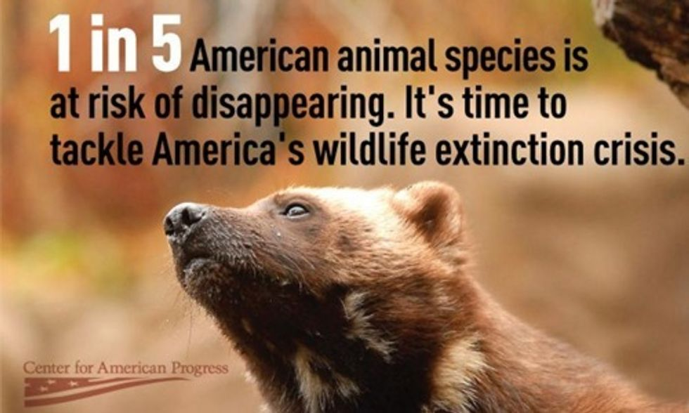 1 in 5 American Animal Species Is at Risk of Extinction
