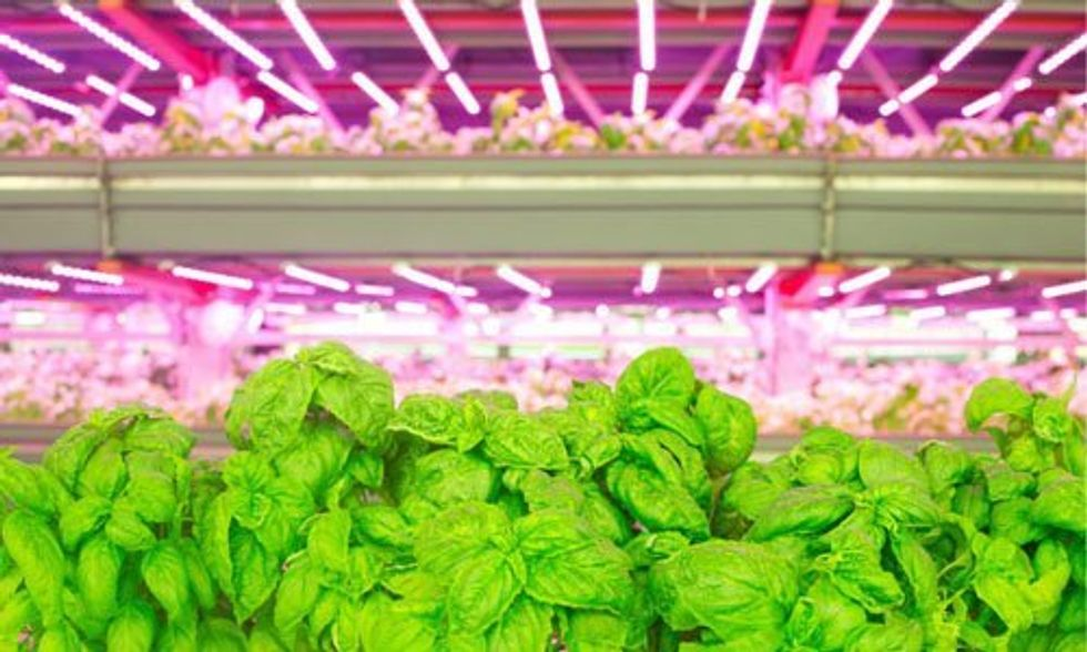 Inside the Nation's Largest Organic Vertical Farm
