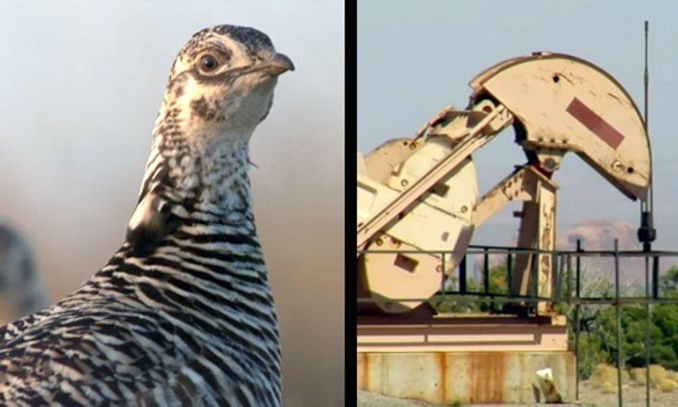 U.S. Government vs. Big Oil in the Fight Over a Chicken