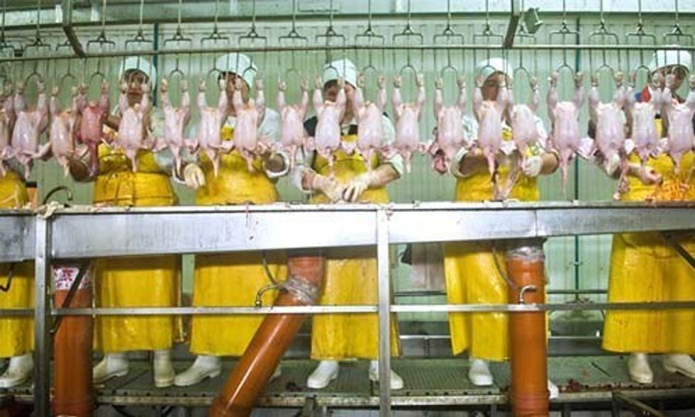 The Human Cost of Cheap Chicken