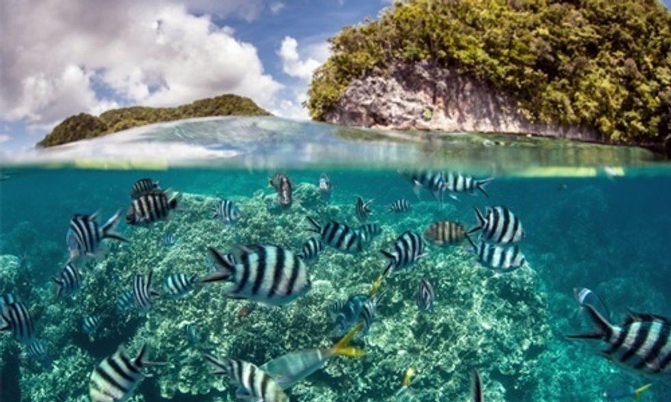 Palau Creates One of the World's Largest Marine Sanctuaries
