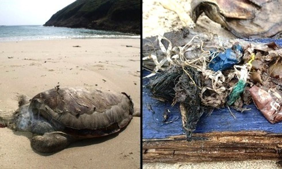 Shocking Photos of Green Sea Turtle Killed by Ingesting Plastics and Other Marine Litter