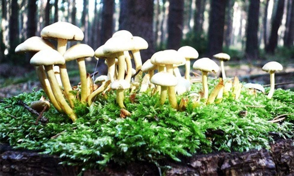 The Mystical Powers of Mushrooms