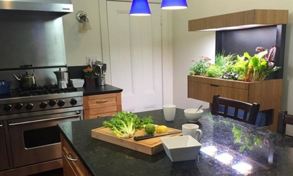 Indoor Veggie Garden Lets You Grow Your Own Food Right in Your Kitchen