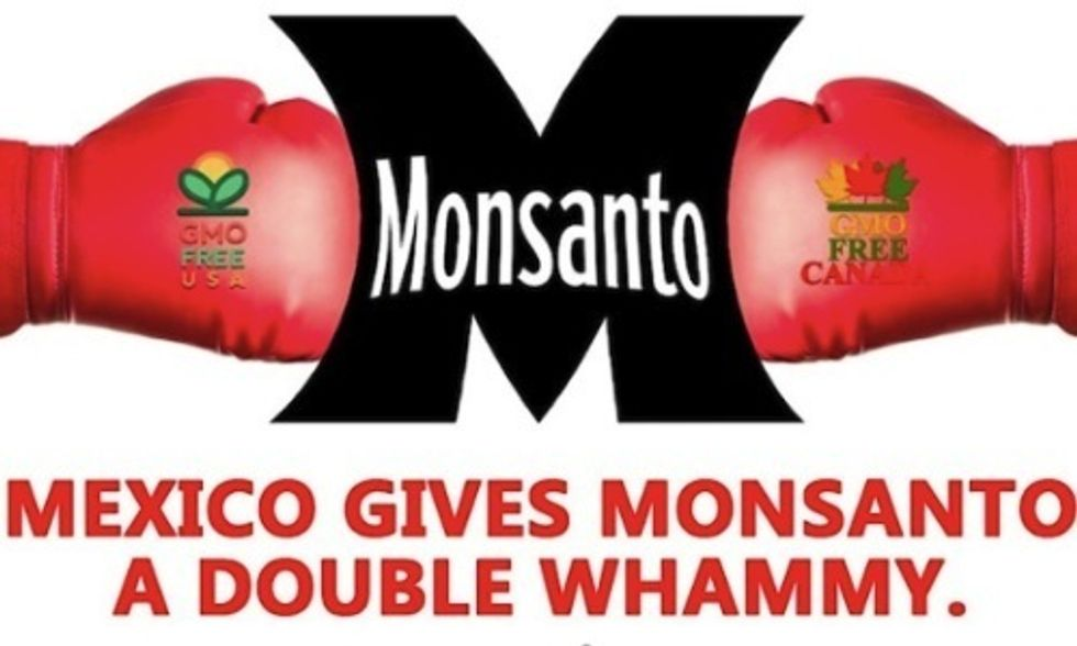 Monsanto Handed 'Double Whammy' by Mexican Courts Over Planting GMOs