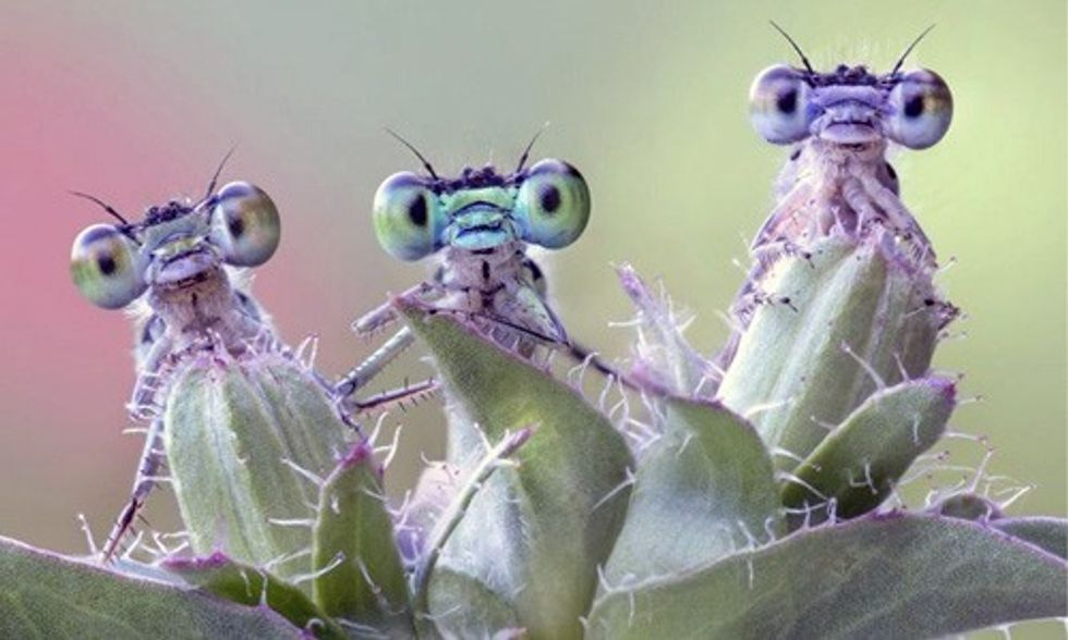 14 Stunning Nature Photos That Won Siena Contest From 15,000 Submissions