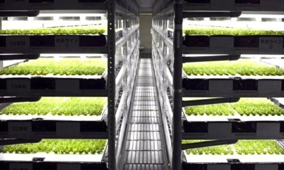World's First Robotic Farm to Produce 30,000 Heads of Lettuce Per Day