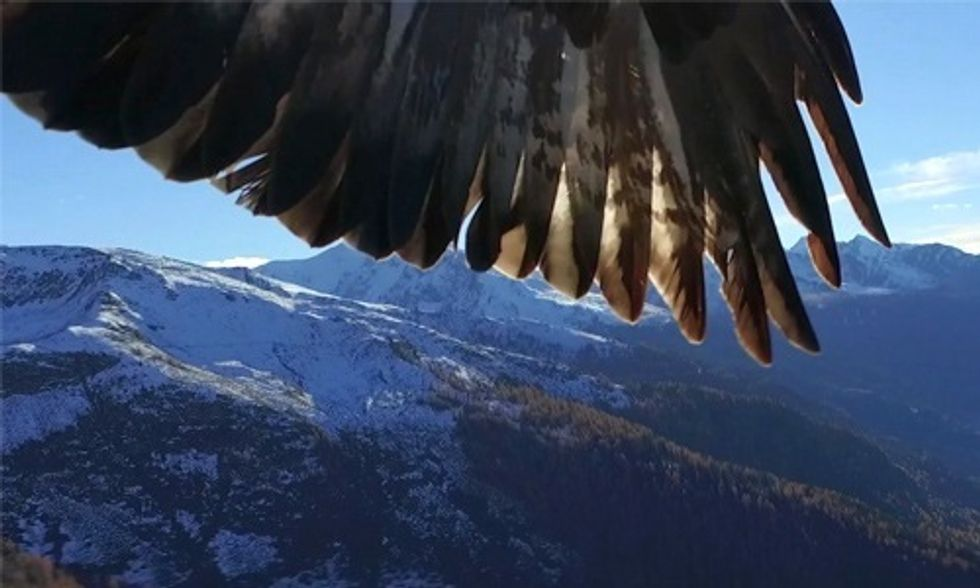 Watch This Eagle Snatch a Drone in Mid-Air