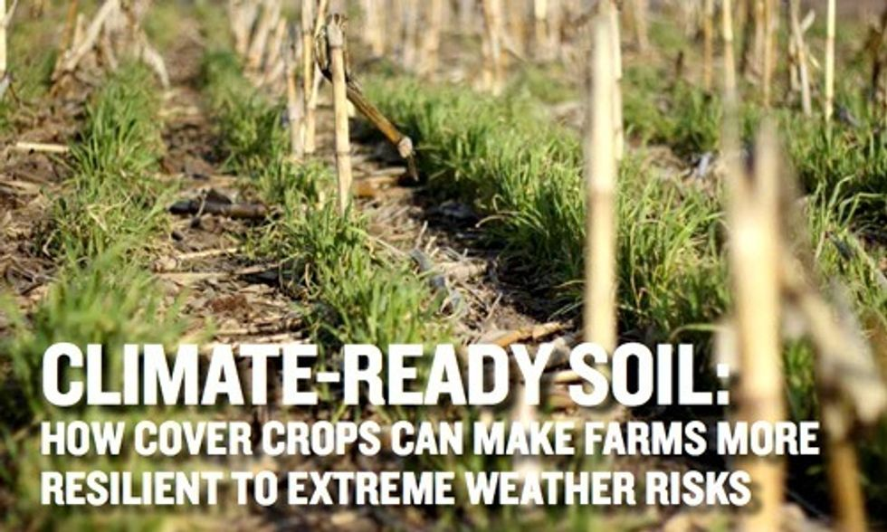 How Healthy Soils Can Help in the Fight Against Climate Change