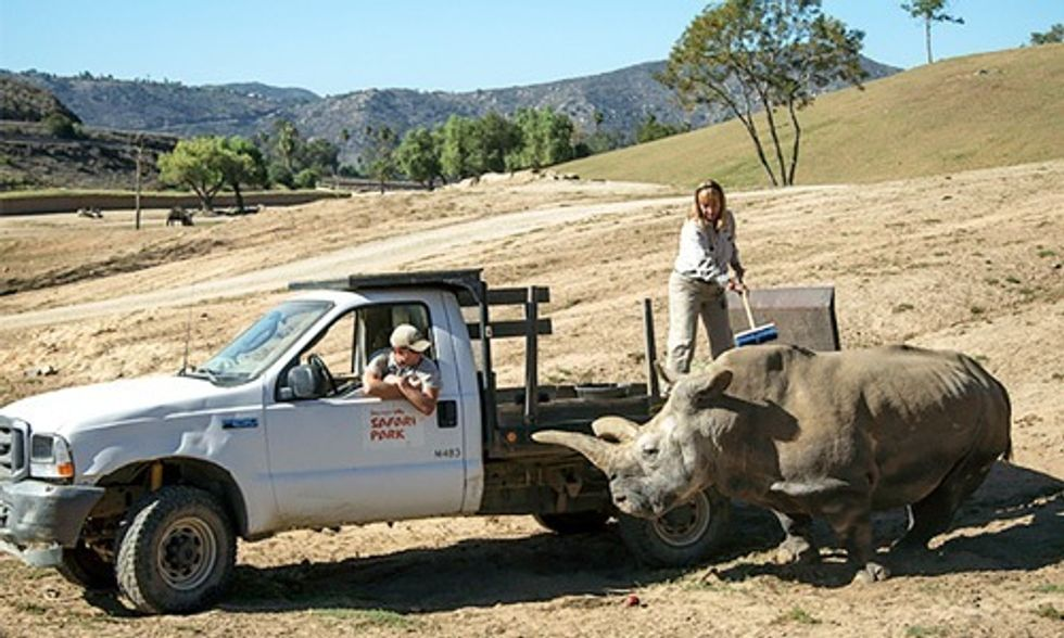 Only 3 Northern White Rhinos Left on Earth After Death of Nola at San Diego Zoo