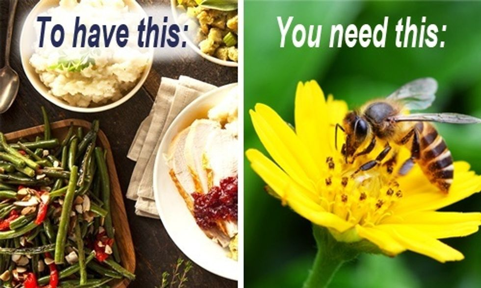Bee Thankful This Thanksgiving: Demand Big Food Stop Killing Our Pollinators