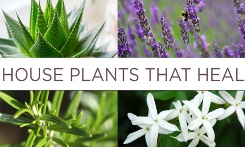 6 House Plants That Can Dramatically Improve Your Health