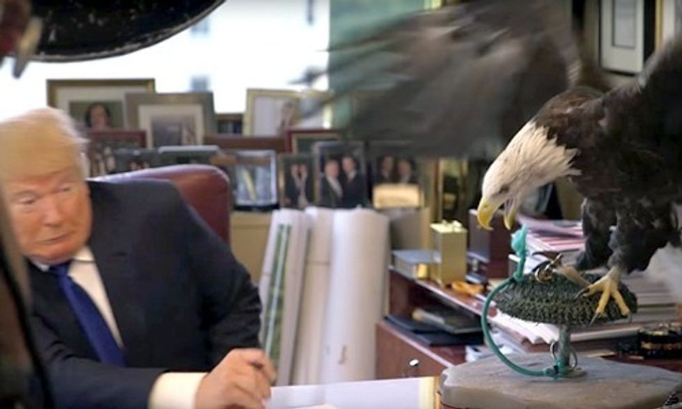 Donald Trump Attacked by Eagle Named Uncle Sam, GIF Goes Viral