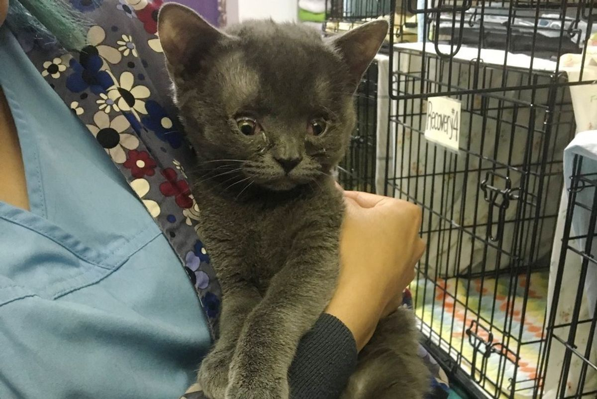 Cat Born Special Tells His Human Every Day How Happy He is to be Loved