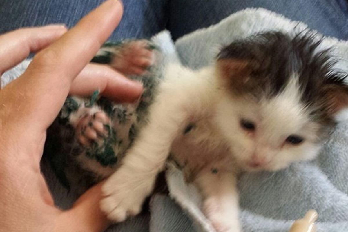 They Try to Find the Hero Who Saved Paint-covered Kitten in Dumpster
