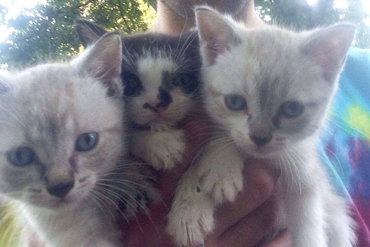 Man Found 3 Kittens Under a Gazebo, and Was Chosen by One