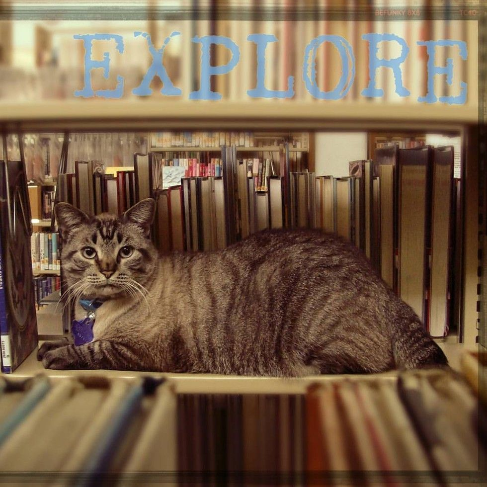 browser library cat removed by city council