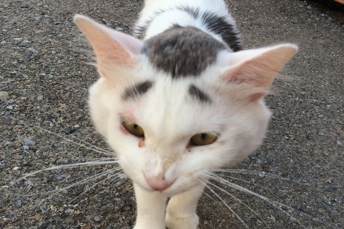 Stray Cat with Eyebrow Like Markings Walks Up to Woman for Cuddles