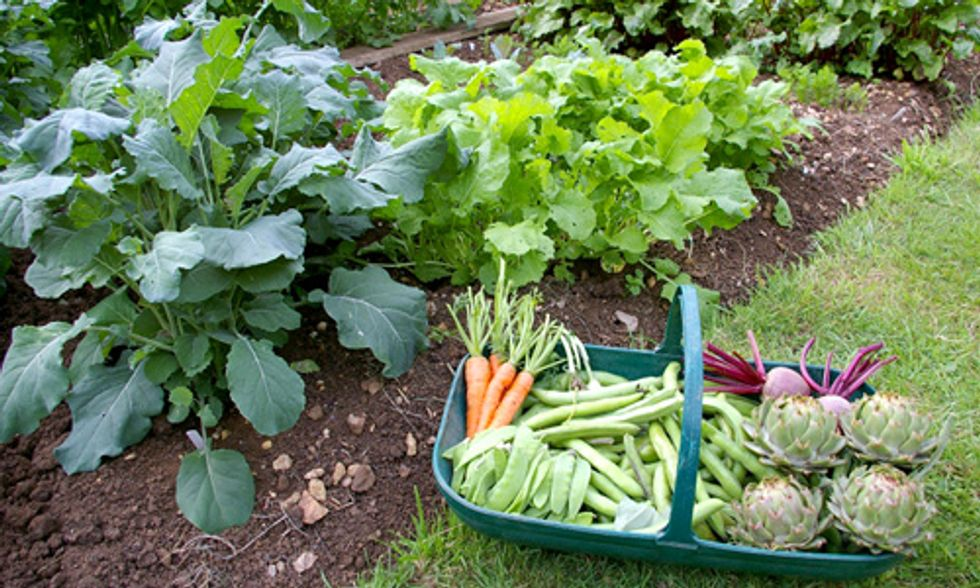 Is Growing Your Own Food the Only Way to Truly Be Vegetarian or Vegan?