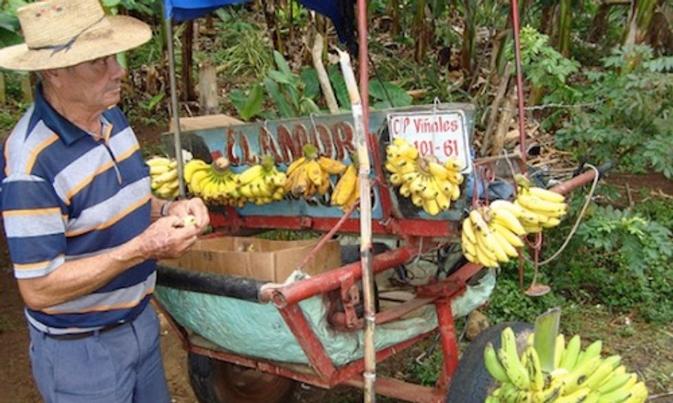 Can Cuba Supply America's Growing Appetite for Organic Food?