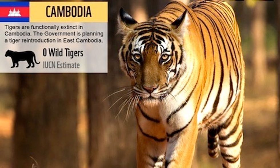 Tigers Declared Extinct in Cambodia