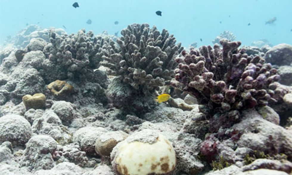 Largest Coral Atoll in the World Lost 80 Percent of Its Coral to Bleaching