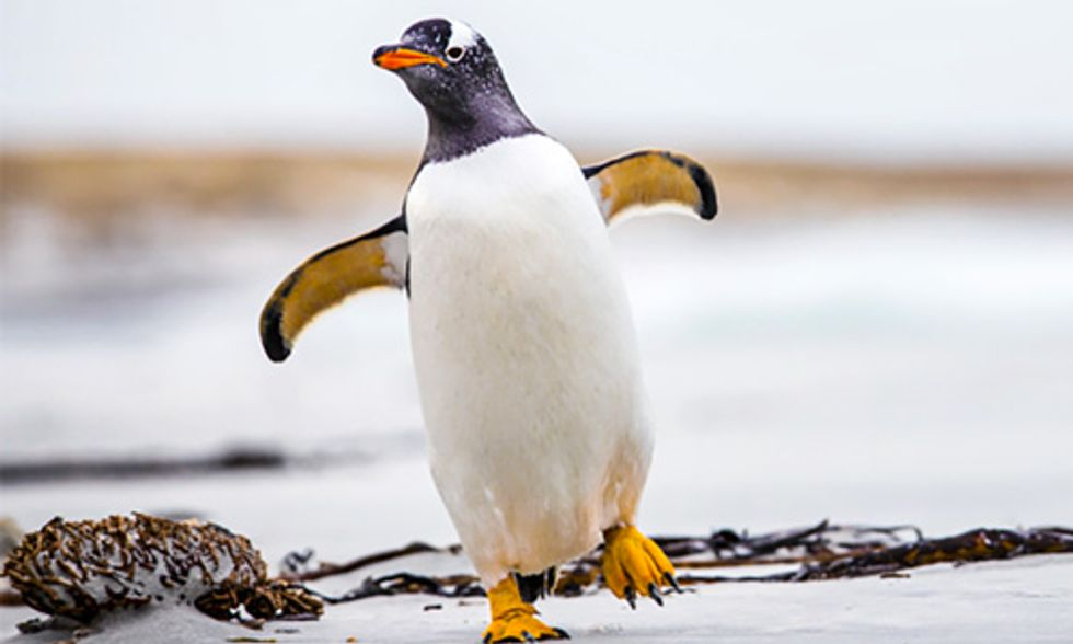 Antartica's Penguins Need Your Help, Become a Citizen Scientist Today