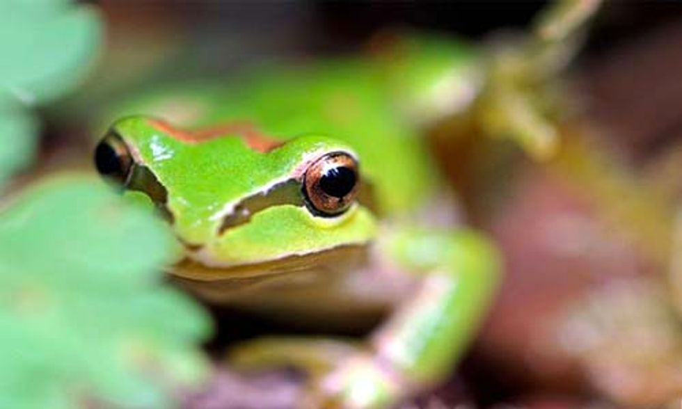 3 Frog Species That Depend on the Very Unique Habitat of Vernal Pools